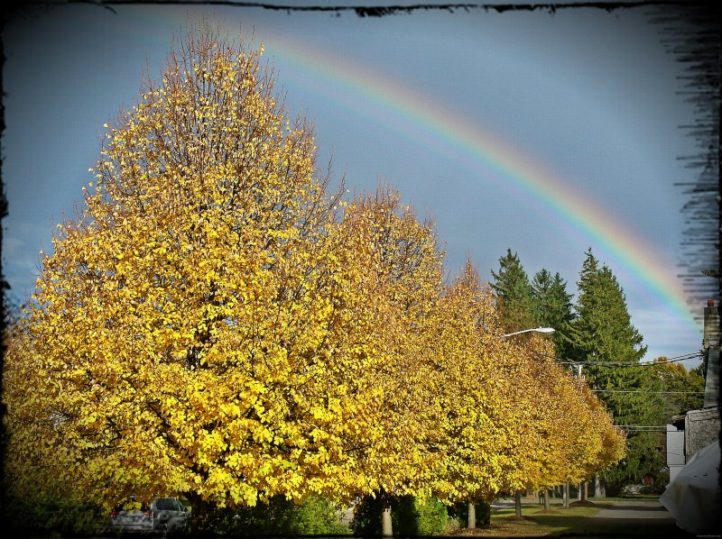 Vermont Rainbow Foliage 2012 by Heavenly Ryan